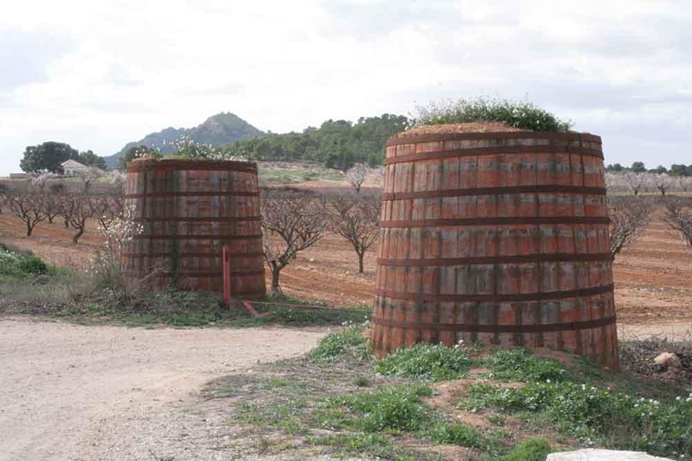 Cooperativas vitivinícolas