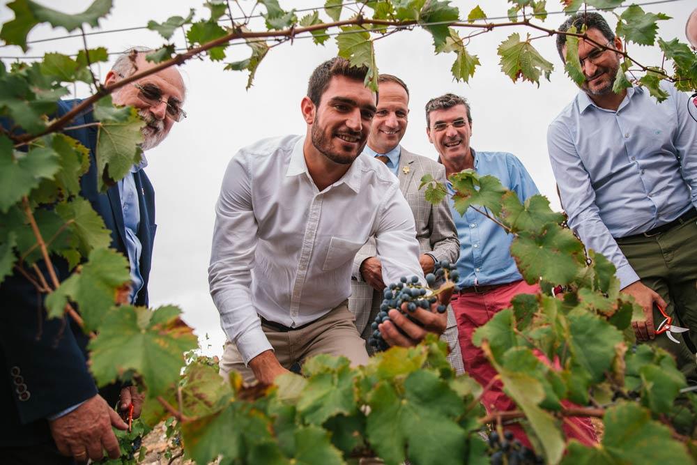 Corte de uva simbólico por Jorge Ureña padrino de la añada 2019 de vinos Alicante DOP
